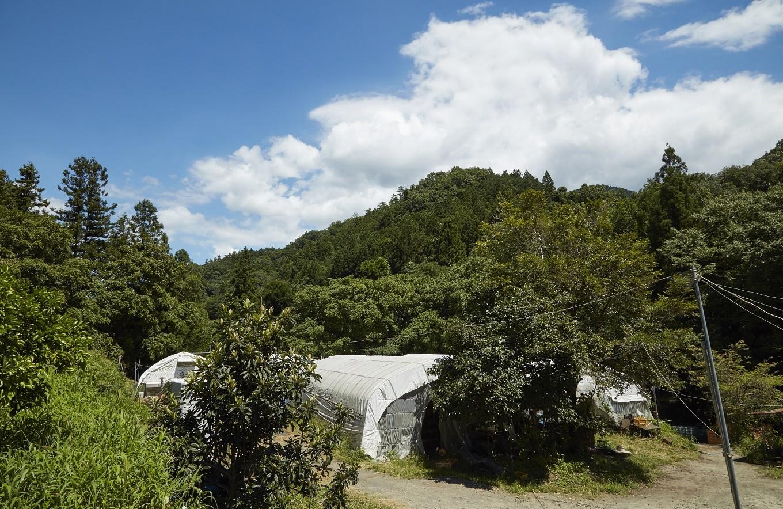大坂屋自慢の椎茸は、澄んだ空気と清流の流れる環境で育てられている