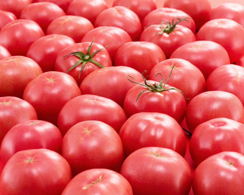 四万十とまとの採れたてトマト(完熟時)