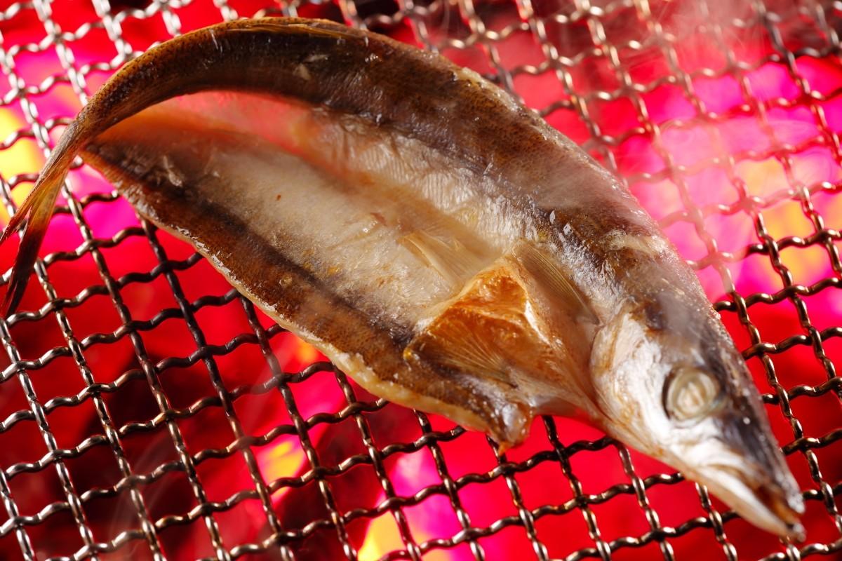 刺網等で多く漁獲されるカマス。脂ものって、とっても美味しいですよ!!