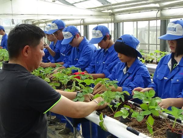 地元の高校生にいちごの植え方を指導する生産者の高峰さん(手前)