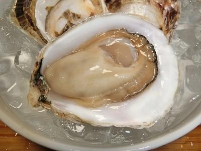 太良の牡蠣