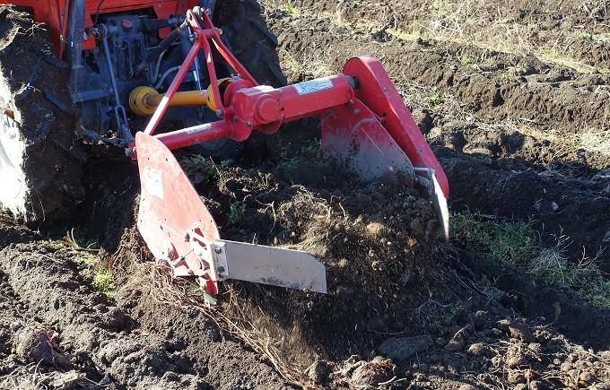 トラクターを使って、里芋を掘り起こしていきます