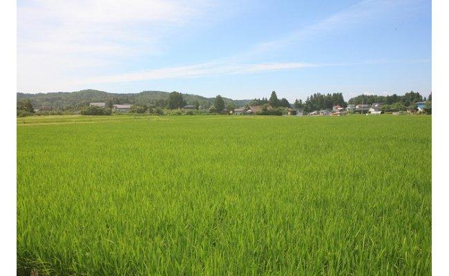 澄んだ空気!大自然に恵まれた環境で生産されています。