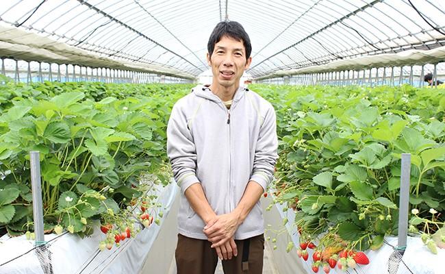 いろいろな品種の完熟イチゴを食べ比べてみてください(園主の関口さん)