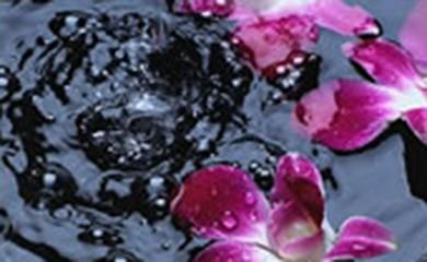こだわり3「水~細胞の隅々に行きわたる水」