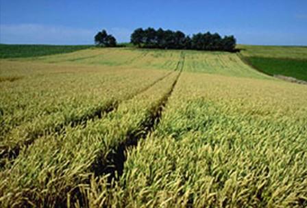 小麦へのこだわり