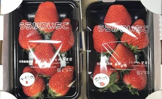 1箱2パック入り×2箱で発送※写真左「かおり野」写真右「恋みのり」