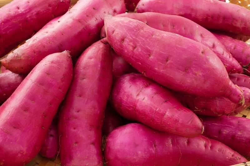 掛川を中心とした静岡県遠州地方で育てたサツマイモ「紅はるか」