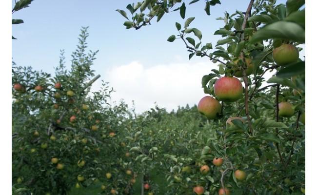 自然の恵みを吸収した収穫したてのフレッシュな状態でお届けします