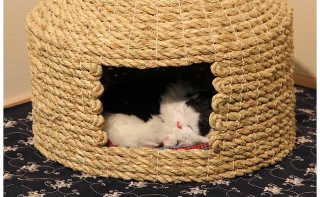D29002愛猫の和風高級マンション!国東猫ちぐら(シングル)・通