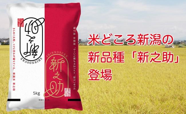 米どころ新潟の新品種「新之助」登場