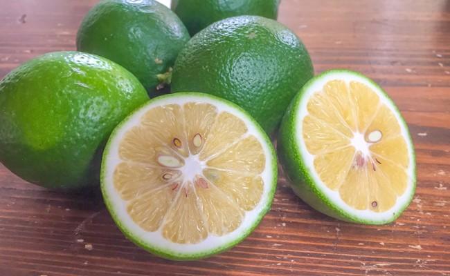 有機栽培で育てた有機マイヤーレモン 2.5㎏