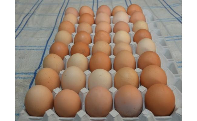 卵の殻や黄身の色は、エサによって異なりますので、ご了承願います。