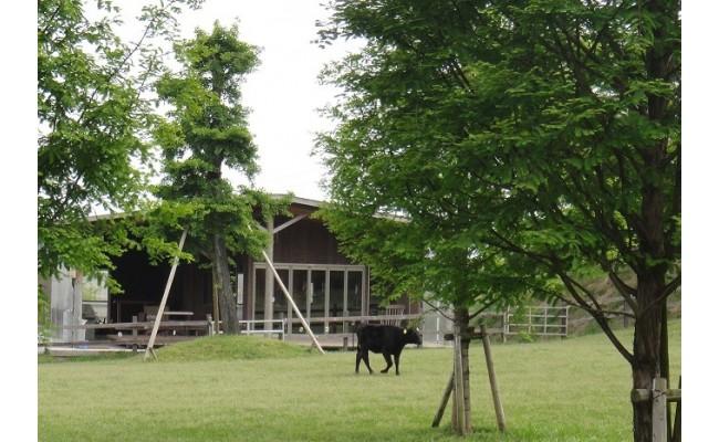 広々としたすすき牧場