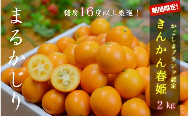きんかん春姫 2kg