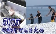 S006 地曳網漁業体験&新鮮な海の幸バーベキュー!