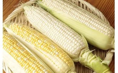 1-014 季節限定トウモロコシのおまかせ詰め合せ