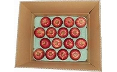 りんごCA-3 期間限定 千秋りんご