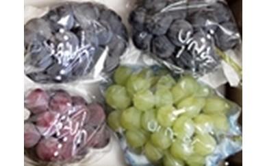 ぶどうCC-1 上田市産ぶどう2kg三色詰め合わせ