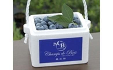 ブルーベリーCD-1 「森のサファイア」ブルーベリー 生果実