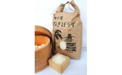 茂原農産物直売所 旬の里ねぎぼうず お米(コシヒカリ5kg)