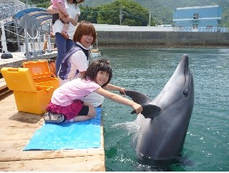 イルカとふれあい体験チケット