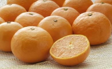 B-03 カラオレンジ 4kg