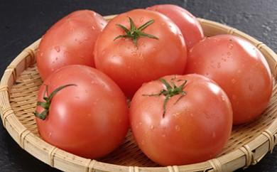 B-12 トマト(ごほうび) 減農薬