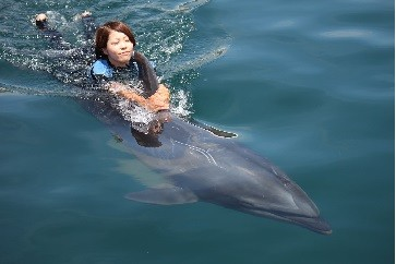 D-090 イルカと泳ごう!チケット