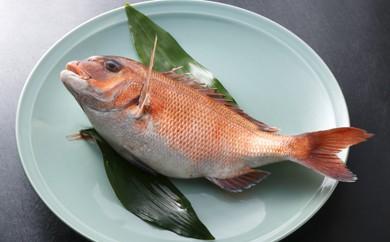 A1-07 活鯛を熟練活きじめ!筑豊魚市場「真鯛直送便(三枚おろし)」1尾約1.5kg