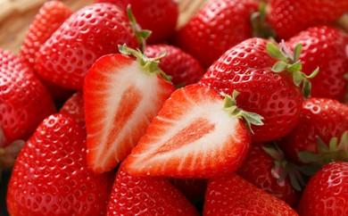 F2-01 苺の最高傑作!自然農法アルギット農業「あまおう苺」280g×2パック詰め