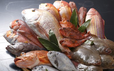 A1-10 筑豊魚市場厳選!旬の天然魚を直送「特選旬魚直送便」