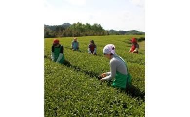 【D】JAS認定あり!有機緑茶詰め合せB