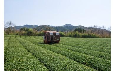 【C】有機緑茶!みのりの茶ギフトセットB