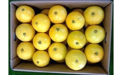 A016 東伊豆の恵 ニューサマーオレンジ5kg箱