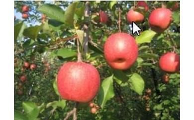 旬のりんごAセット A-101