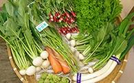 [№5663-0003]季節の野菜や果物の詰め合わせ