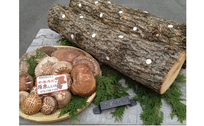 20-2 とよの原木しいたけ2本(取っ手付き)、原木生しいたけ1Kg