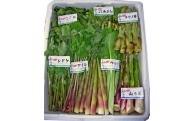 C1401 山菜セット(おまかせ3種)