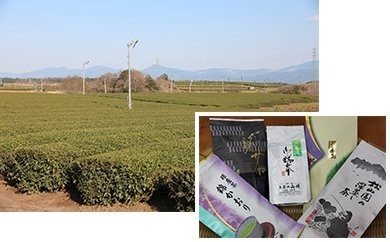 A-14 錦のお茶