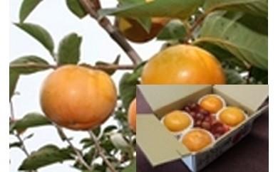 A-6 錦の柿と栗