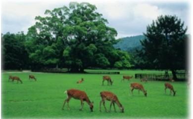 G-53 定期観光バス「B 奈良公園3名所と若草山」ペアチケット