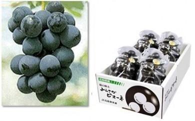 RF154 みらさかピオーネ(露地栽培)【1.5P】