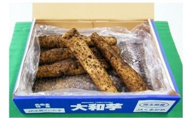 2 熊谷の名産「大和芋」4kg