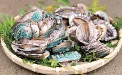 [結-3]たっぷりの海藻ミネラルで育てた 島原のアワビ