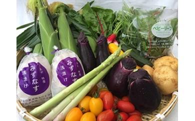 A042 泉州TONOファームの季節の野菜と自家製お漬物セット(小)