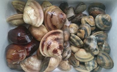 【1-2】伊勢湾産あさり等貝類詰め合わせセット