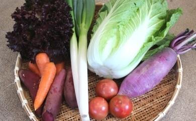 B-0407_自然生態系農業の甘藷&野菜セット