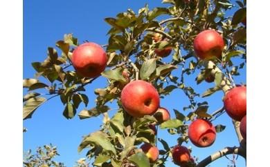 A03 辰野産リンゴ(サンふじ)