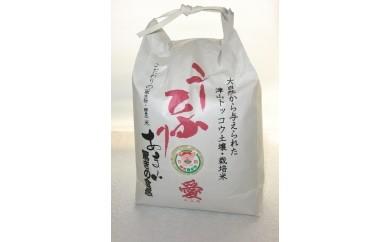津山産特別栽培米 酵素米 こしひかり 愛 30kg